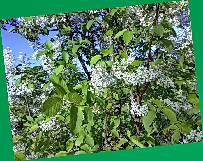 аллергия на цветение название